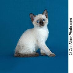 tailandés, blanco, gatito, sentado, en, azul