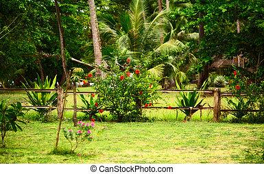 tailandés, naturaleza