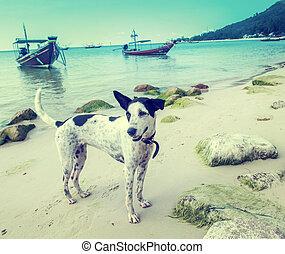 tailandia, cão, mar
