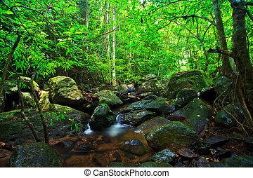 tailandia, cascada, bosque, profundo