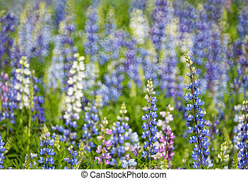 tailandia, flores, bonito, norte
