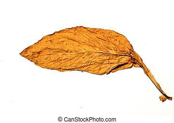 tailandia, folha, tabaco
