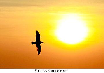 tailandia, gabbiano, fondo, tramonto
