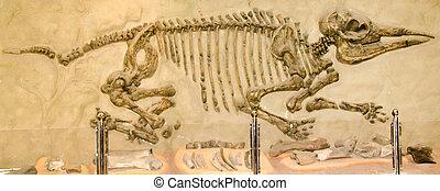tailandia, kalasin, esqueleto, -, dinossauro, modelo, oct, ...