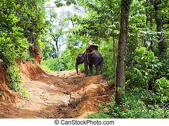 tailandia, selva, caminata, elefante