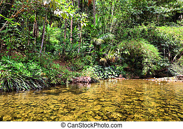 tailandia, selva, río