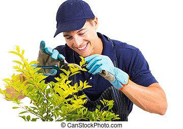 taille, plante, blanc, jardinier
