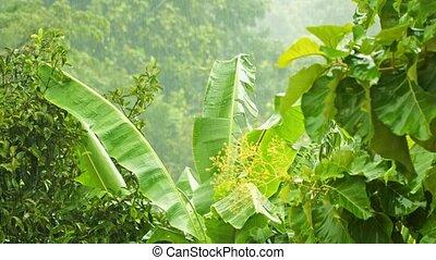 Tainy season in tropical climate - Video UHD - the rainy...