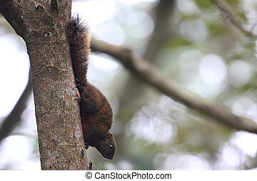 Taiwan squirrels