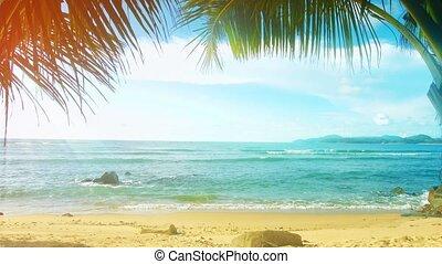 tajlandia, phuket, island., słoneczny, plaża, z, dłoń...