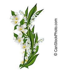 tak, van, jasmijn, bloemen, vrijstaand, op wit, achtergrond