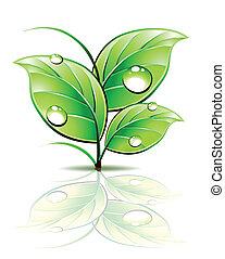tak, van, spruit, met, dauw, op, groene, leaves., vector