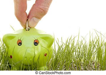 takarékbetét pénz, képben látható, egy, piggy-bank, fű