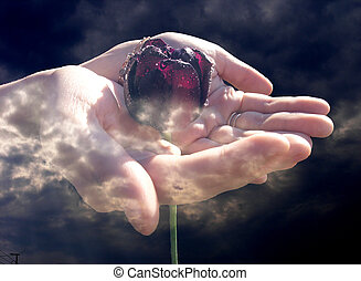 Take care of life - Hands holding a flower around dark evil...
