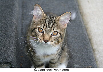 Take Me Home - Kitten on farm in Innisfil Beach, Ontario,...
