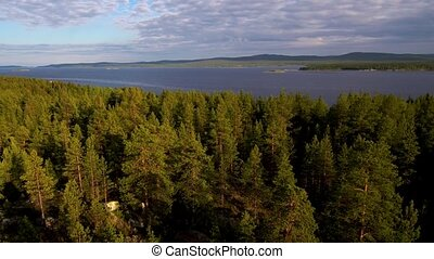 Take-off drone over the forest on a sunny day. View of the...