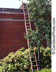 Takes a Long Ladder to Reach Top
