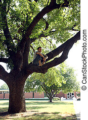 Man sitting in tree on college campus.