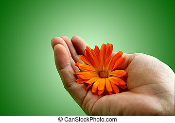 Hand holding a flower with care