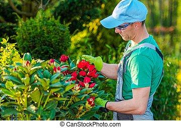 Taking Care of Backyard Plants