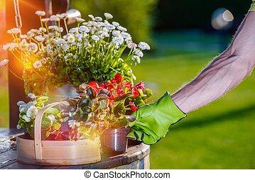 Taking Care of Garden Flowers