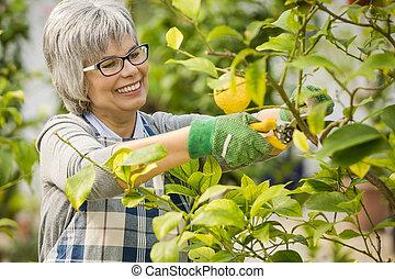 Taking care of lemon tree