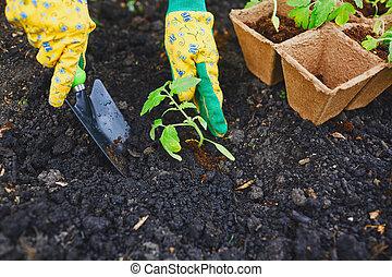 Taking care of seedlings