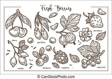 takken, blossom , bladeren, verzameling, bes, fris, monochroom