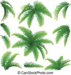 takken, palmbomen