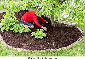 talajtakarás, kert, dolgozó, kertész