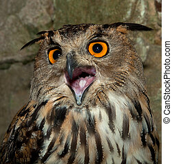 talkative owl - European Eagle owl