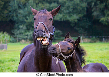 Talking horse with foal in meadow