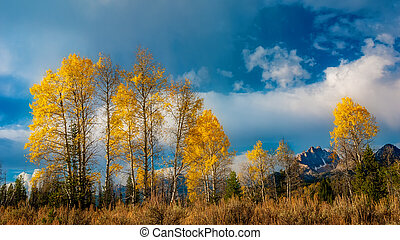 Tall autumn trees with a cloudy sky before an Idaho mountain range