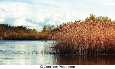 Tall Dry Grass Swayed In Wind In River Or Lake Landscape....