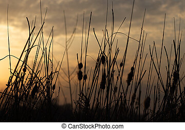 Tall field grass in the rays of the setting sun