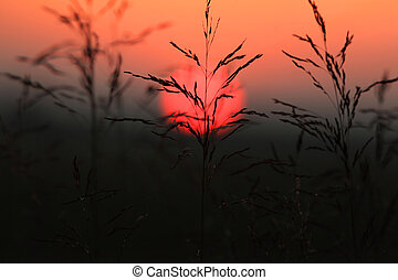 Tall grass against sun set