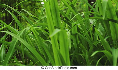 Tall grass against trees - Tall grass in a graden against...