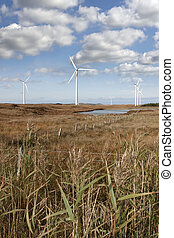 tall grass and bogland with wind turbines