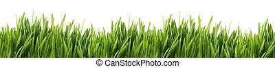 tall grass banner - A banner of long green grass with a...