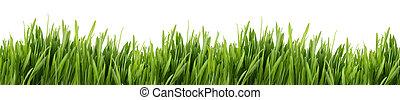 tall grass banner - A banner of long green grass with a...
