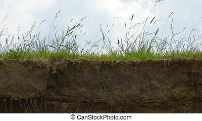 Tall grass growing on the abrupt edge of a cliff.