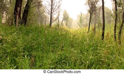 Tall grass in the forest on a foggy day