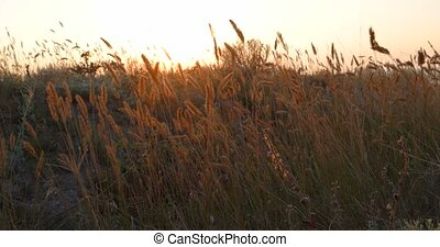 Tall grass on a beach