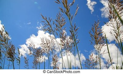 Tall grass swaying in wind against the backdrop of beautiful sky
