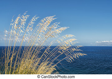 Tall grass with wind and sea