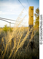 Tall grasses grow from underneath a farm fence
