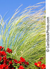 tall green grass and red flowers against a blue sky