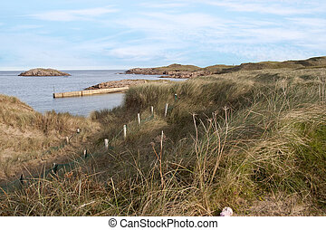 grass on the dunes of a golf course in county Donegal