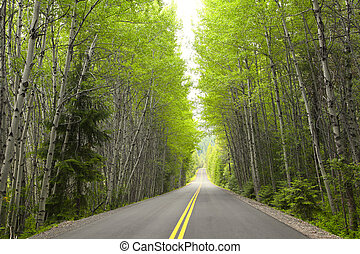 Tall green trees by the high way