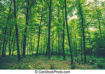 Tall green trees in the spring - Tall green trees in the...